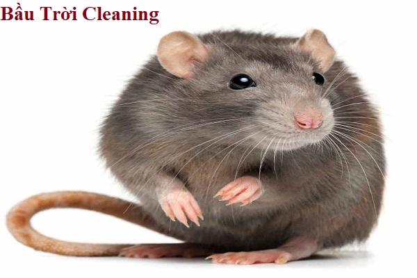 Cách diệt chuột tại nhà