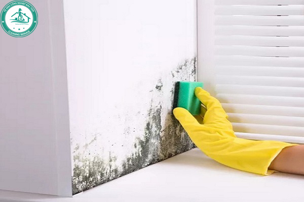 Cách vệ sinh tường mốc bằng bàn chải