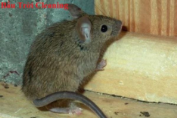 Chuột là gì