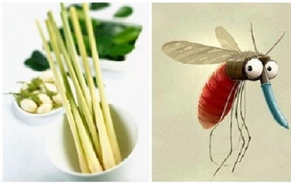Cách đuổi ong tại nhà bằng sả