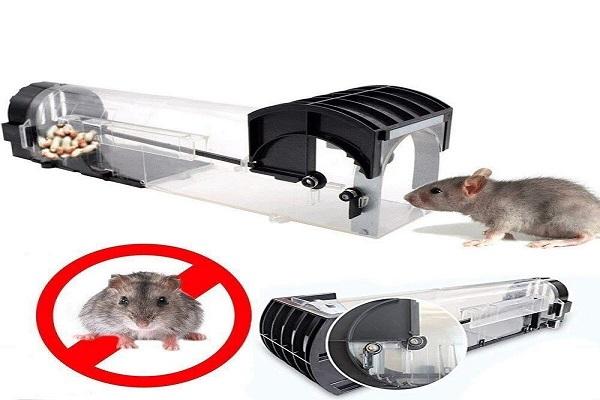 Cách diệt chuột trong nhà bằng bặt bẫy chuột nhân đạo