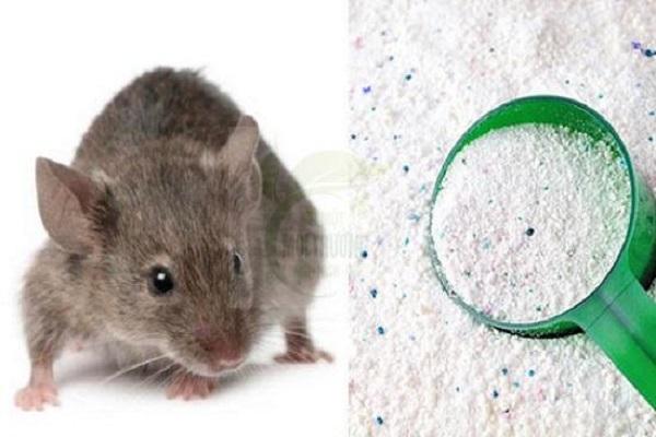 Cách đuổi chuột trần nhà bằng Bột Giặt