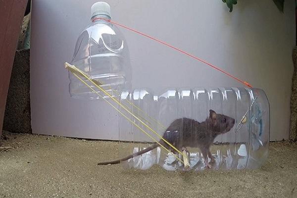 Cách diệt chuột trong nhà bằng thử dùng bẫy tự chế
