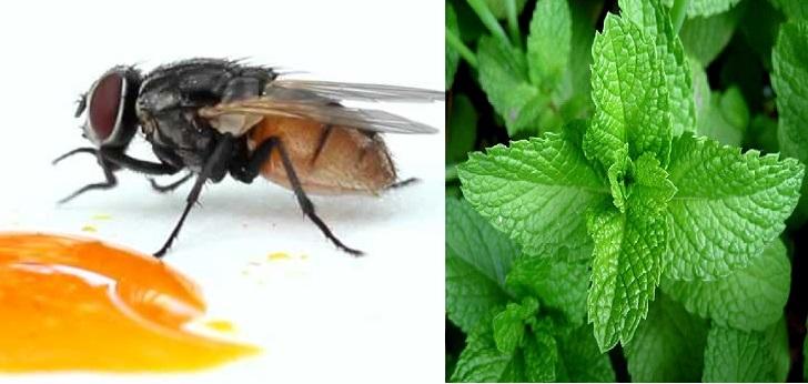 Cách diệt ruồi bằng lá bạc là