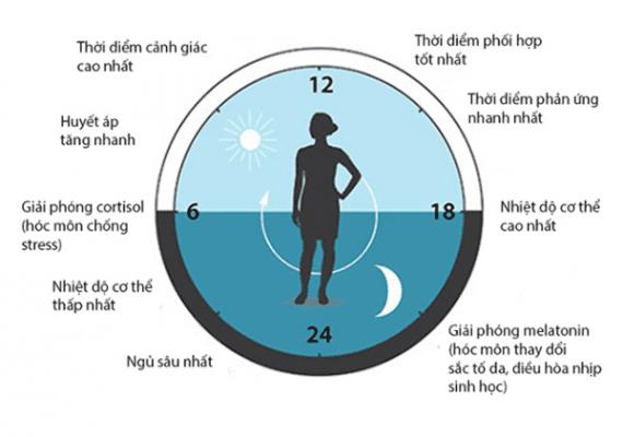 Xây dựng đồng hồ sinh lí chăm sóc sức khỏe