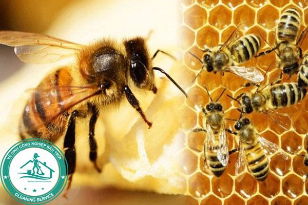 Bị ong đốt có nguy hiểm không