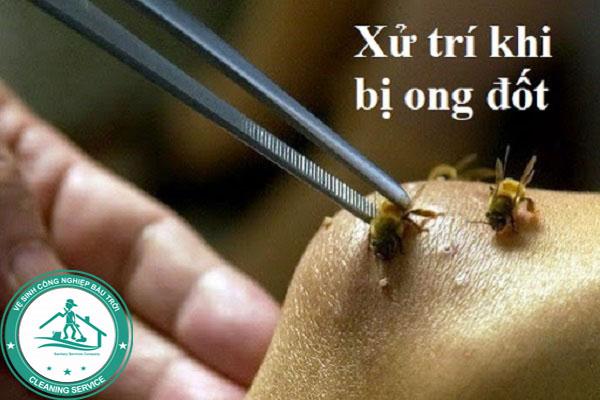 Cách xử trí khi bị ong đốt