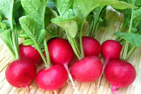 Top 25 thực phẩm ít calo - Củ cải đỏ hỗ trợ giảm cân giữ dáng hiệu quả